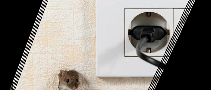 Rodent Control Mosman