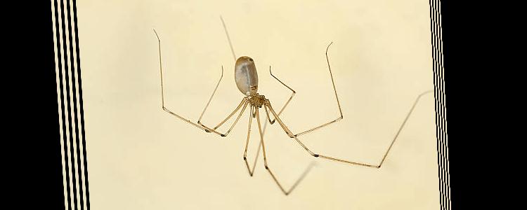 Spider Control Mosman